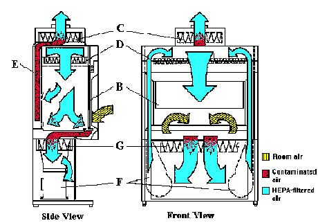 Air Flow Patterns in Biological Safety Cabinets Class II Type B1