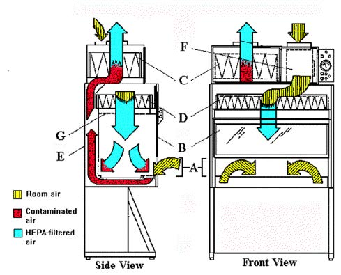 Air Flow Patterns in Biological Safety Cabinets Class II Type B2